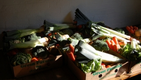 Our Veg Boxes