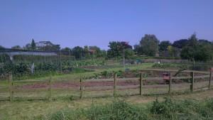 acroos site summer 2014